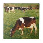 Holstein cattle tile