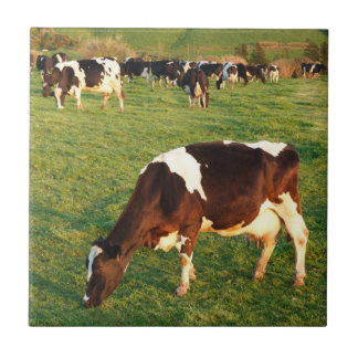 Holstein cattle small square tile