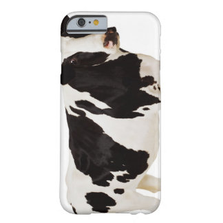 Holstein cow (Bos taurus) Barely There iPhone 6 Case