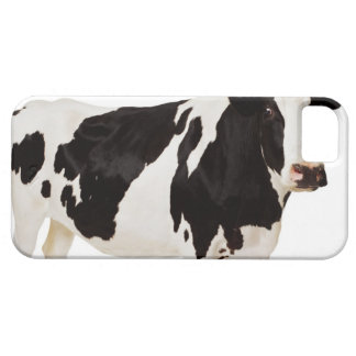 Holstein cow (Bos taurus) iPhone 5 Cases