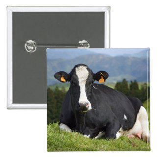 Holstein cow 2 inch square button