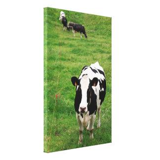 Holstein cow canvas print