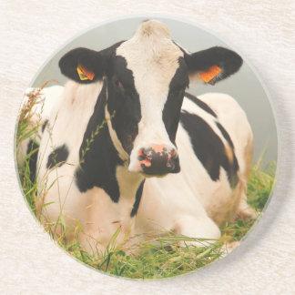 Holstein cow drink coaster