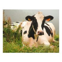 Holstein cow flyer