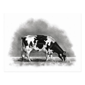 Holstein Cow Grazing: Realism Pencil Drawing Postcard