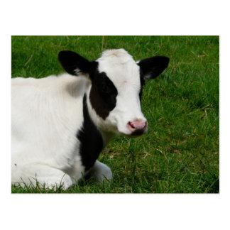 Holstein Cow on Grass Postcard