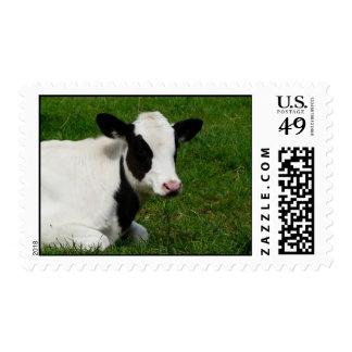 Holstein Cow on Green Grass Stamp