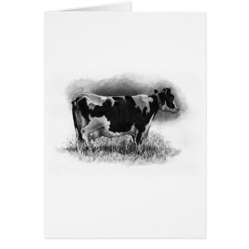 Holstein Cow: Original Pencil Drawing: Dairy Greeting Card