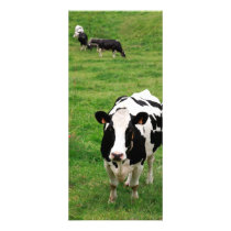 Holstein cow rack card