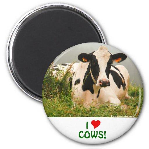 Holstein cow refrigerator magnets