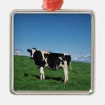 Holstein cow standing in field, Bekkai-Machi, Ornaments