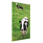 Holstein cow stretched canvas print