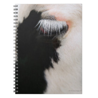 Holstein cow's face, close-up of eye spiral notebook