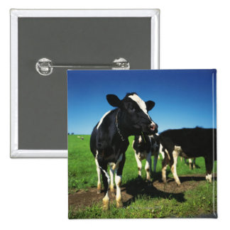 Holstein cows in a field 2 inch square button