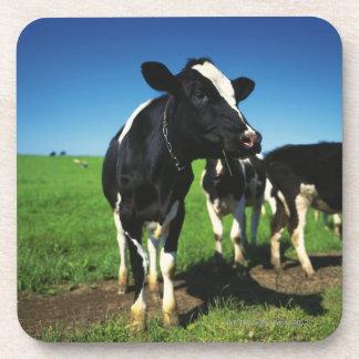 Holstein cows in a field beverage coaster