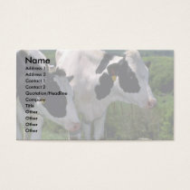 Holstein Dairy Cattle Business Card