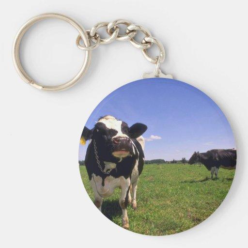 Holstein Dairy Cattle Key Chains