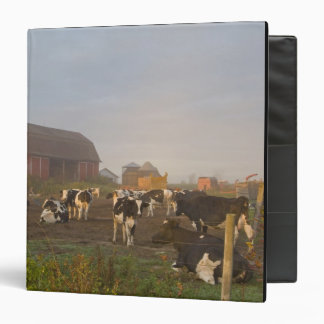 Holstein dairy cows outside a barn at sunrise binder