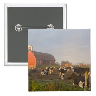 Holstein dairy cows outside a barn at sunrise 2 inch square button