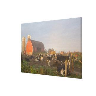 Holstein dairy cows outside a barn at sunrise canvas print