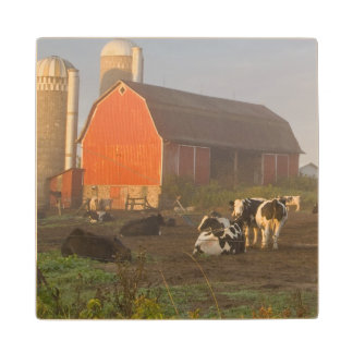 Holstein dairy cows outside a barn at sunrise maple wood coaster