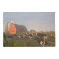 Holstein Dairy Cows Outside A Barn At Sunrise