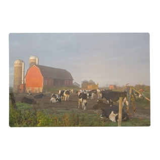 Holstein Dairy Cows Outside A Barn At Sunrise Placemat at Zazzle