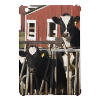 Holstein en la granja pantanosa del prado en Walpo