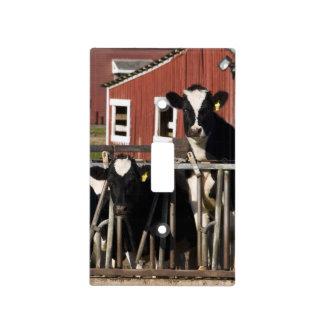 Holstein en la granja pantanosa del prado en Walpo Placas Para Interruptor