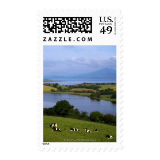 Holstein-Fresian Cattle, Bantry Bay, Co Cork, Stamps