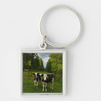 Holstein Fresian Pair of Steers Keychain