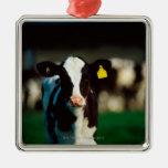 Holstein-Friesian calf Christmas Tree Ornaments
