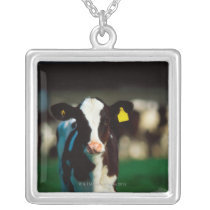 Holstein-Friesian calf Silver Plated Necklace