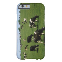Holstein-Friesian cattle, Ireland Barely There iPhone 6 Case