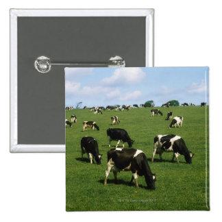 Holstein-Friesian cattle, Ireland 2 Inch Square Button