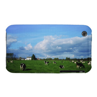 Holstein-Friesian Cattle near Thurles, Co Case-Mate iPhone 3 Case