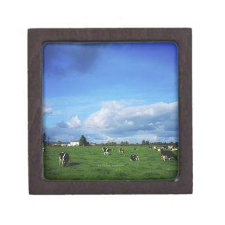 Holstein-Friesian Cattle near Thurles, Co Gift Box