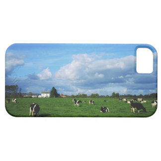 Holstein-Friesian Cattle near Thurles, Co iPhone SE/5/5s Case