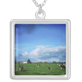 Holstein-Friesian Cattle near Thurles, Co Silver Plated Necklace