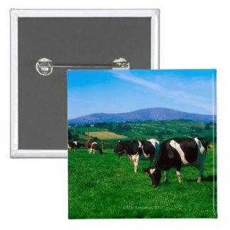 Holstein-Friesian cows near Borris, County 2 Inch Square Button