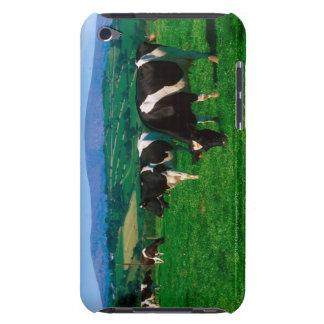 Holstein-Friesian cows near Borris, County iPod Case-Mate Cases