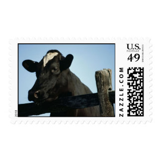 Holstein Postage Stamps