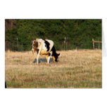 Holstein que pasta