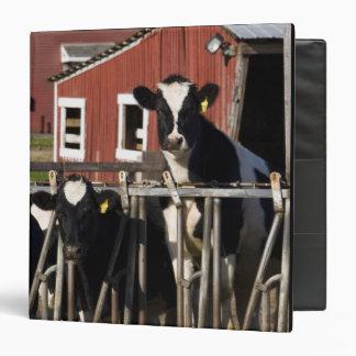 Holsteins at Boggy Meadow Farm in Walpole, New Binders