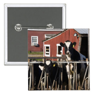 Holsteins at Boggy Meadow Farm in Walpole, New 2 Inch Square Button
