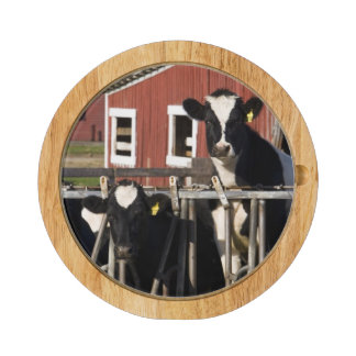 Holsteins at Boggy Meadow Farm in Walpole, New Cheese Board