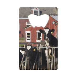 Holsteins at Boggy Meadow Farm in Walpole, New Credit Card Bottle Opener