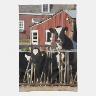 Holsteins at Boggy Meadow Farm in Walpole, New Hand Towels