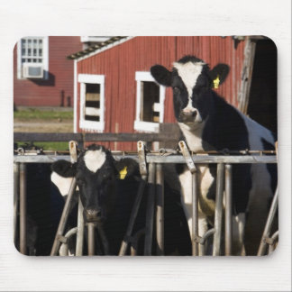 Holsteins at Boggy Meadow Farm in Walpole, New Mouse Pad