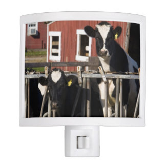 Holsteins at Boggy Meadow Farm in Walpole, New Night Light
